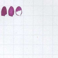 [Ink Test Library] Pilot Iroshizuku Inks Part 3 of 4 - In The Pink, And Purple Besides
